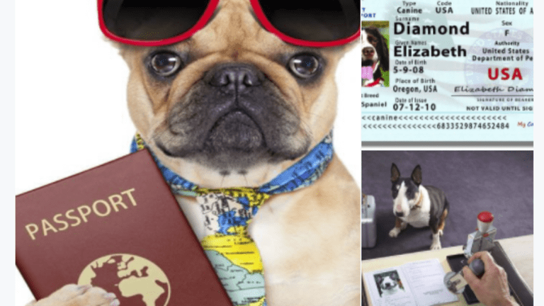 Cats and Dogs Enter the Brexit Picture, Literally: Turmoil at Odds With Reality