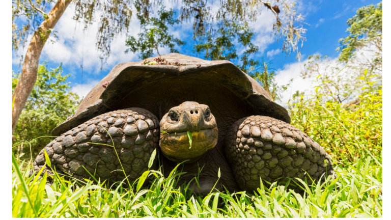 To Live Longer, Healthier, and Happier Be More Like a Tortoise