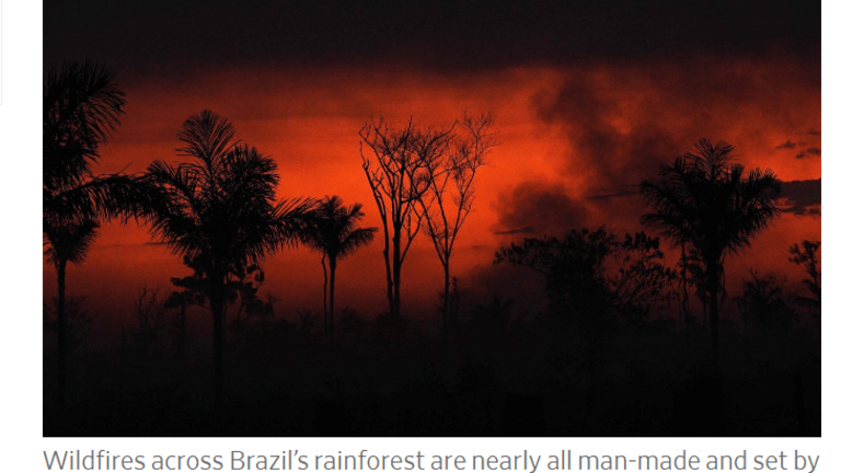 Brazil Wants $1 Billion to Stop Burning the Amazon Forest, Should We Pay?